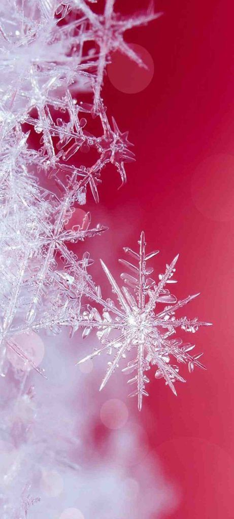10 Wallpapers That Will Look Perfect On Your Samsung Galaxy S20 - #08 - Close-Up Snowflakes - Hd Wallpapers   Wallpapers Download   High Resolution Wallpapers