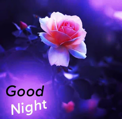 100+ Good Night Images For Whatsapp
