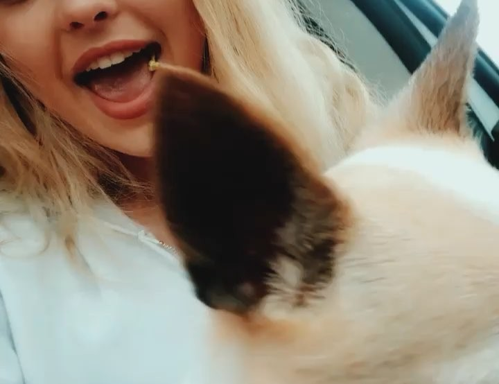 Loren Gray today i have to say goodbye to a dog that's grown up with me Wallpaper