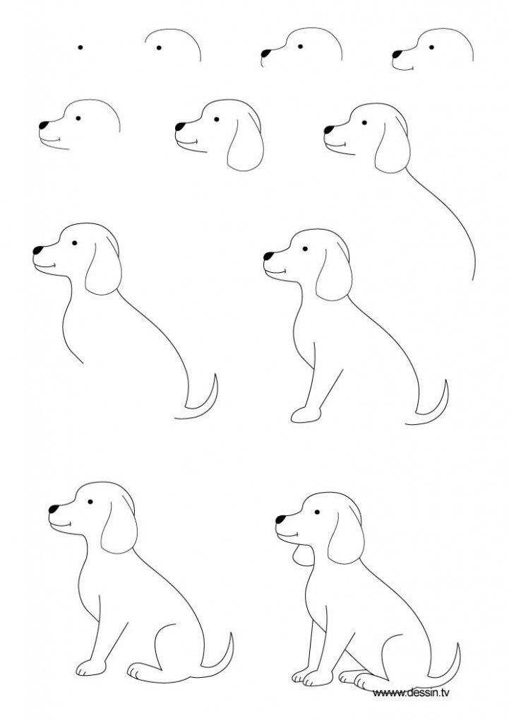 Five Disadvantages Of Easy Drawings Of Dogs Step By Step And How You Can Workaround It | Easy Drawings Of Dogs Step By Step