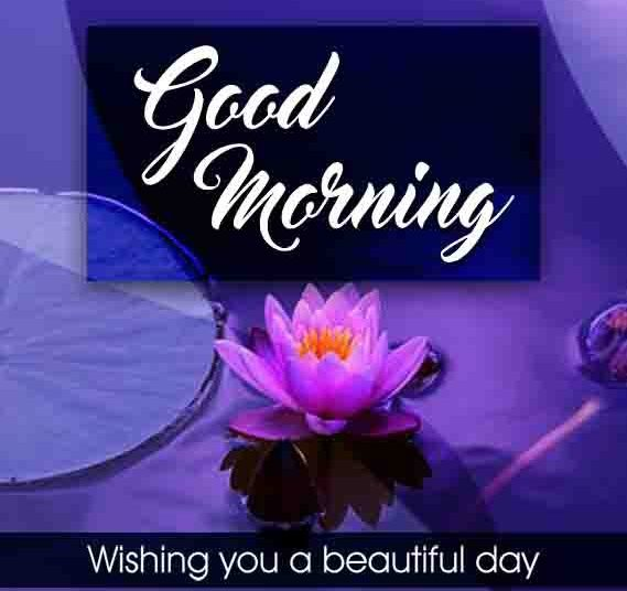 Best 250+ Beautiful Good Morning Images Best Collection (-) Only Good Morning Images