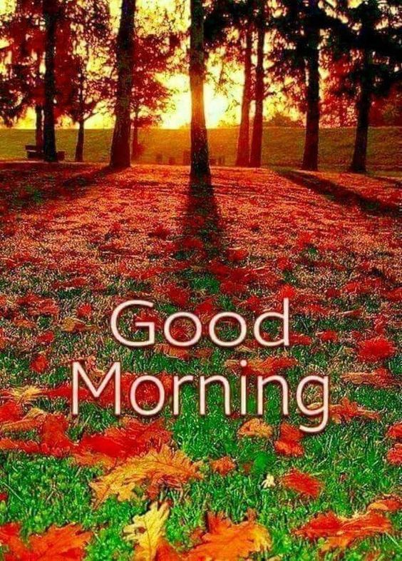 Best Good Morning Images For Whatsapp, Free Download Hd Wallpaper, Pictures, Photos Of Good Morning
