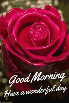 Top 134+ Good Morning Wishes With Rose - [ Best Hd Images ]