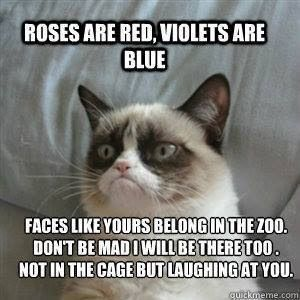 14 Hilarious Grumpy Cat Memes That Will Make You Smile