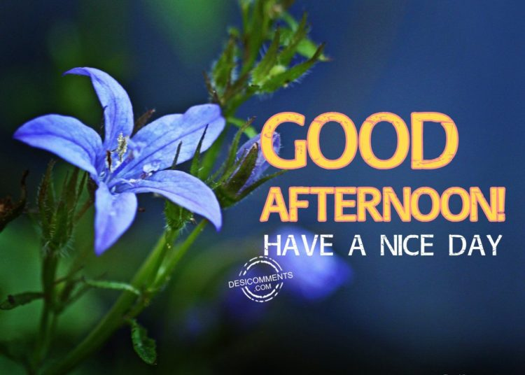 Best Good Afternoon Images And Quotes