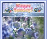 Flowers Blowing In Wind
