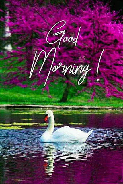 Good Morning Images 2021 New Pictures Wallpapers Photos