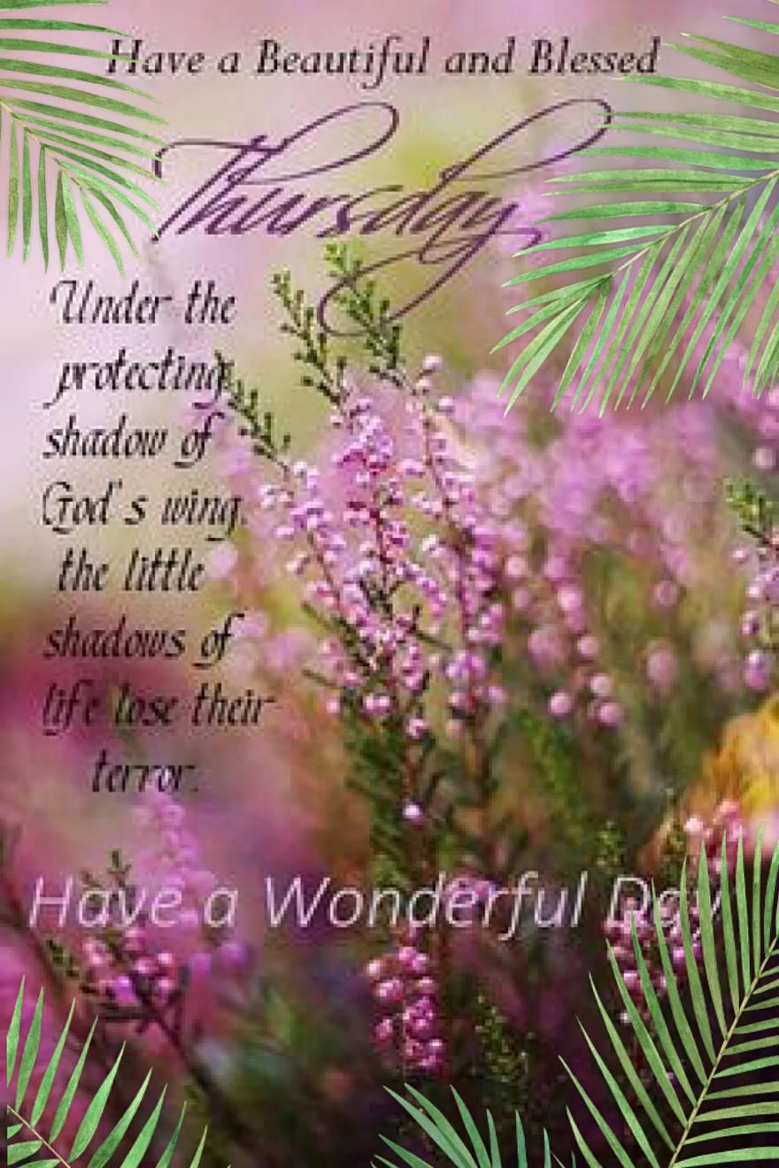 Have A Wonderful Day?
