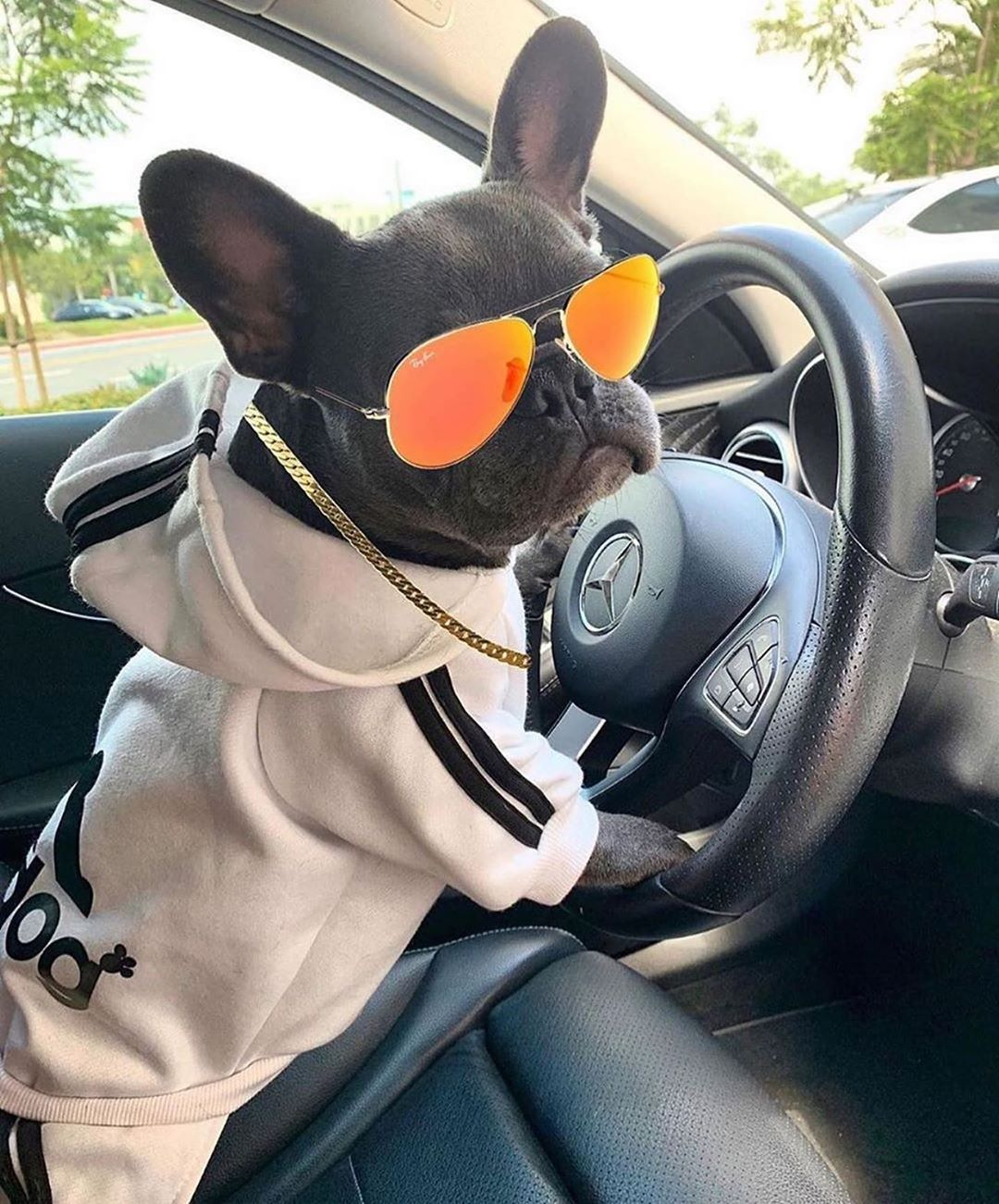 """My Cutest Frenchie ? On Instagram: """"Get In The Car, Girl ?? @Lil_Bodhi_Bleu ? Tag Us And Hashtag #Mycutestfrenchie In Your Posts For Features! . . . . . . .…"""""""