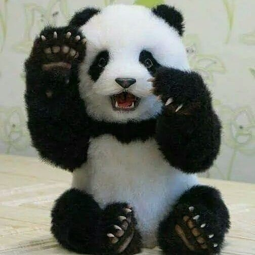 """Panda On Instagram: """"Cute Panda With Fearing Face ?? Follow For More _ - - - ? From:@_Pandaplanet_…"""""""