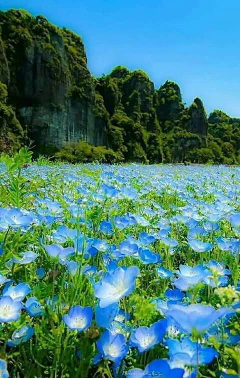 Beautiful Landscapes And Flowers: Bild 1080P Full Hd