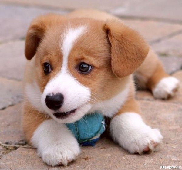 Cute Puppy. Me Want