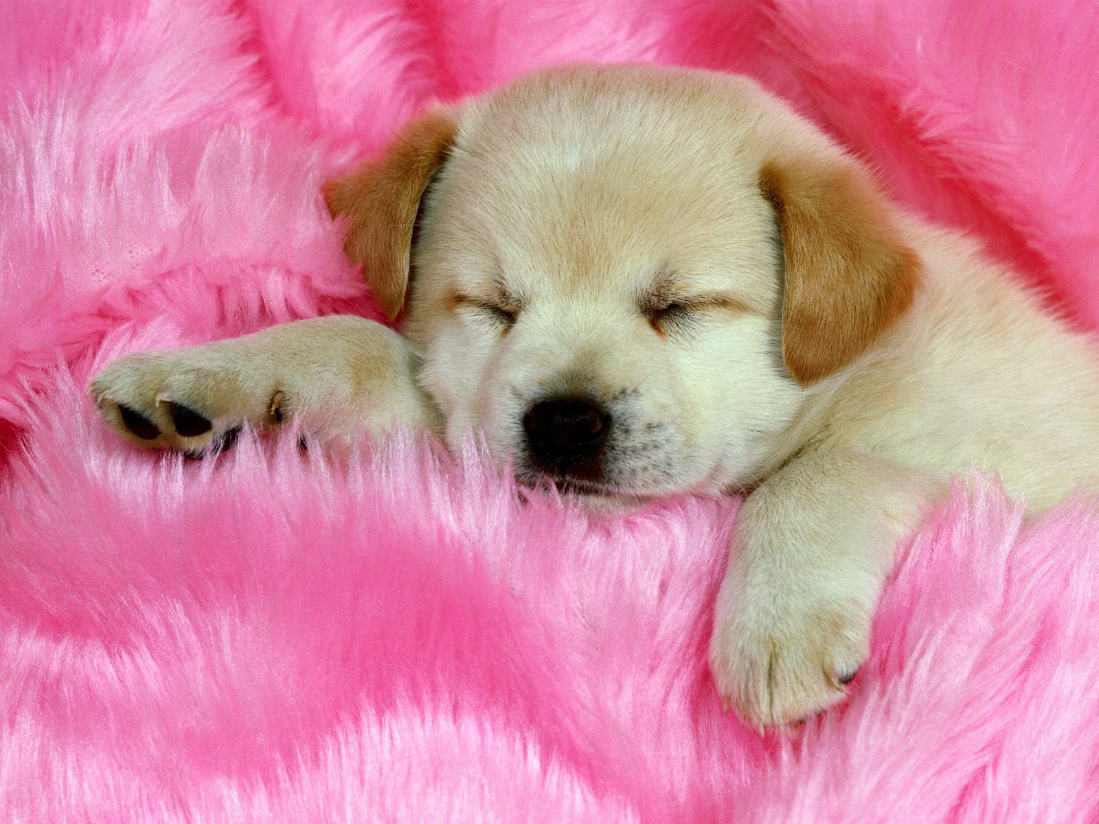 20 Free Cute Puppy Dogs Puppies Wallpapers Hd Download