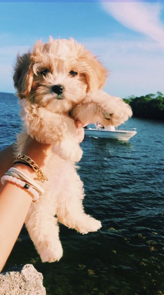 Cute Puppy Pictures You Will Love