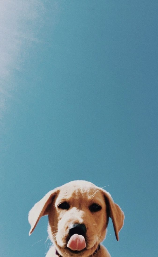 Cute Puppy Background For Iphone And Android