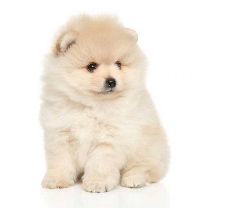 Cute Puppy Breeds | 101 Cutest Puppies Ever | Dogsbarn