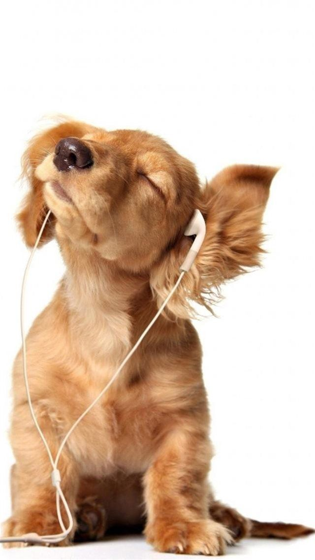 Intoxicated Listen To Music Cute Puppy Iphone 8 Wallpapers