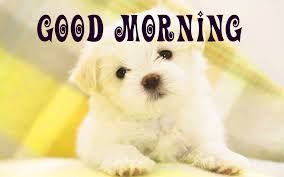 Best Cute Puppy Good Morning Photo Hd Download