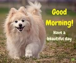 Cute Puppy Good Morning Picture Hd Download