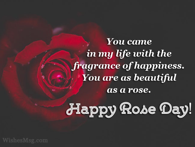 90+ Rose Day Wishes, Messages And Quotes | Wishesmsg