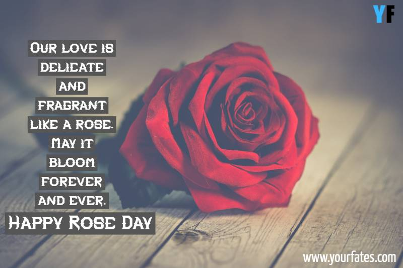 Best Rose Day Quotes, Wishes And Message For You Love | Yourfates