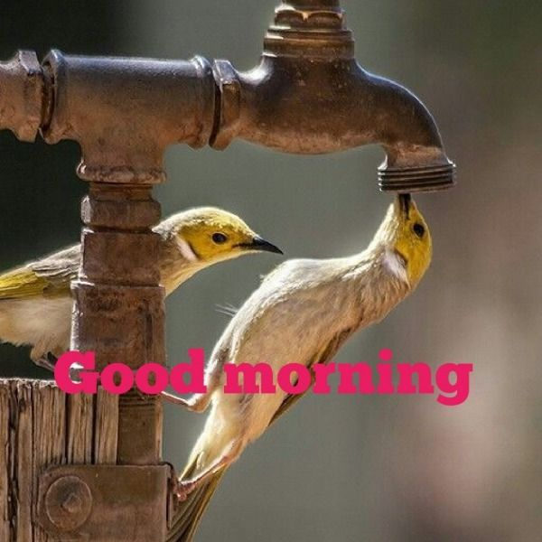 Good Morning Pic HD Free Download