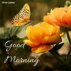 Good Morning Images With Flowers, Quotes, And Butterflies