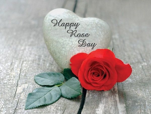 Rose Day - Specials Status Video Download- Messages &Amp; Quotes